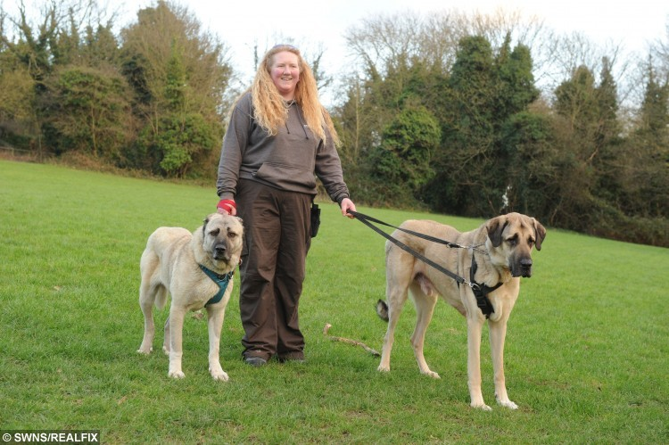 Tracey alongside Celina the dog who was attacked with an axe and had her ears cut off with Kurt one of Britain's biggest hounds
