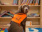 Barking Mad! Meet the DOG who learned to READ