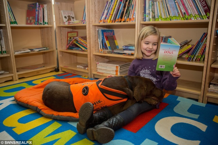 Cerys, 7, with two-year-old chocolate labrador Fernie, the reading dog