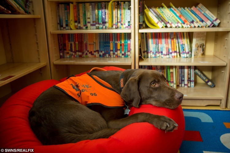 Fernie, the reading dog, at Winford Primary school in Somerset