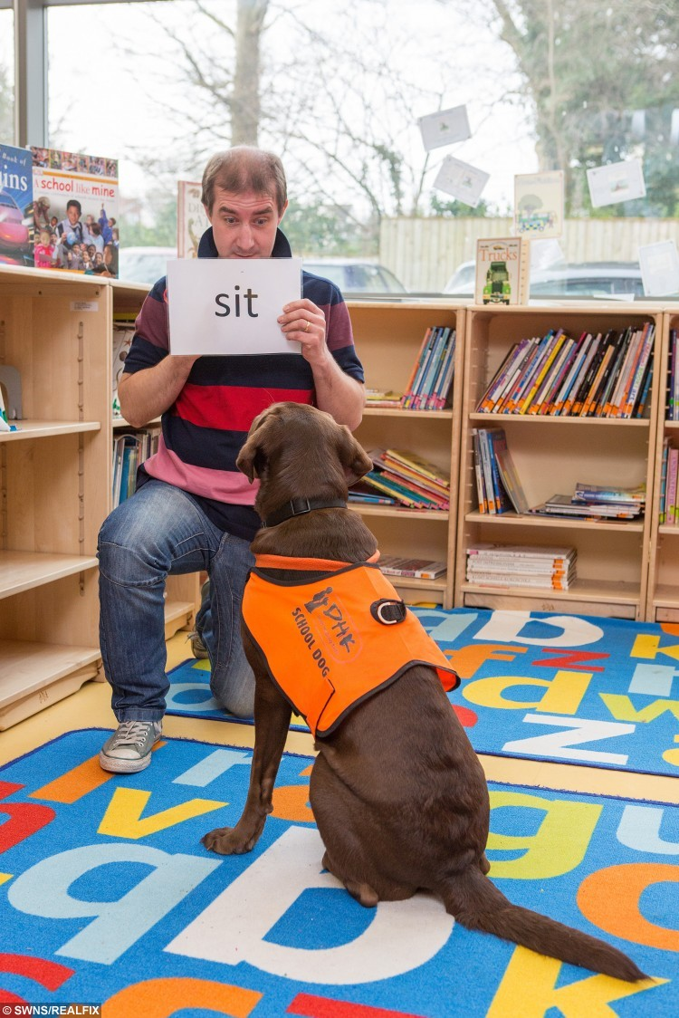 Nik and Fernie, the reading dog, at Winford Primary school