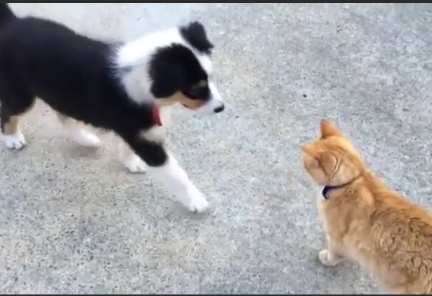 Watch a puppy meeting a cat for the very first time. Aww!