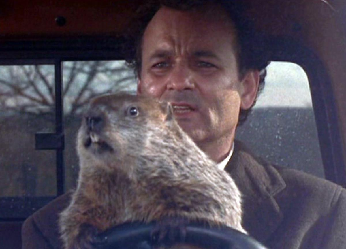 gal-groundhog-day-murray2.jpg