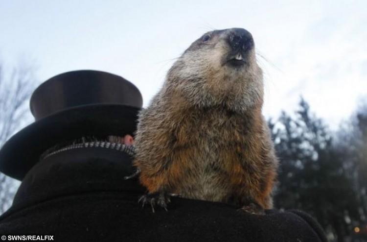 groundhog phil