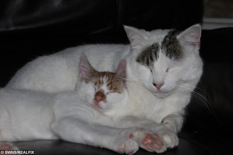 Sean's fat cat Eduardo and his petite-sized cat, Derek.