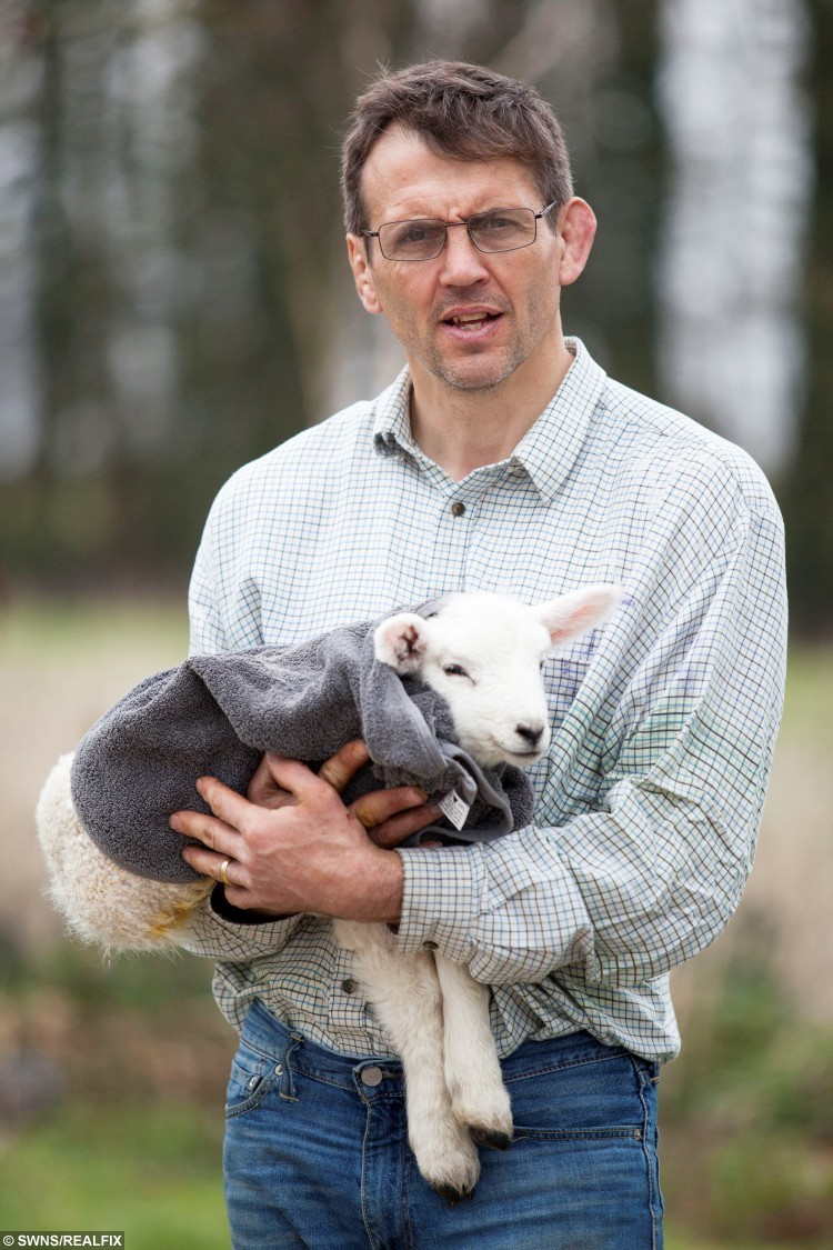 Ed Dee with Lucky the lamb, that was rescued from a freezing cold bucket of water.  Ed saved its life by using his wife's hairdryer and oven.  Desborough, Northamptonshire.  This is the heart-warming moment a farmer saved the life of a newborn lamb which was found in a water bucket by heating it up - with his wife's HAIRDRYER.  See NTI story NTILAMB.  Ed Dee, 47, was checking on his sheep at 4.30am on March 13 when he found one of them had fallen into its mum's water bucket. He rushed the tiny day-and-a-half-old lamb, which was close to death, into the kitchen of his farm house and started to towel dry it. The farmer then put it under a heat lamp but that wasn't working so he turned to his wife Mo's hairdryer. Footage captured by Mo, 46, shows the little lamb lying on a mat inside their house as Ed blow dries his whole body. The 1:03-minute video has now been viewed almost 35,000 times on Facebook in less than two weeks. Incredibly, after drying the baby sheep Ed then put him in the bottom oven of their Aga cooker with the door left open to get his body temperature up. The lamb - who has now been nicknamed Lucky - was then allowed to rejoin his mother in the field when he was fit and healthy at 9am.