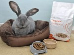 HARE OF THE DOG – Meet Bluebell, the giant rescue rabbit that think she's a pooch