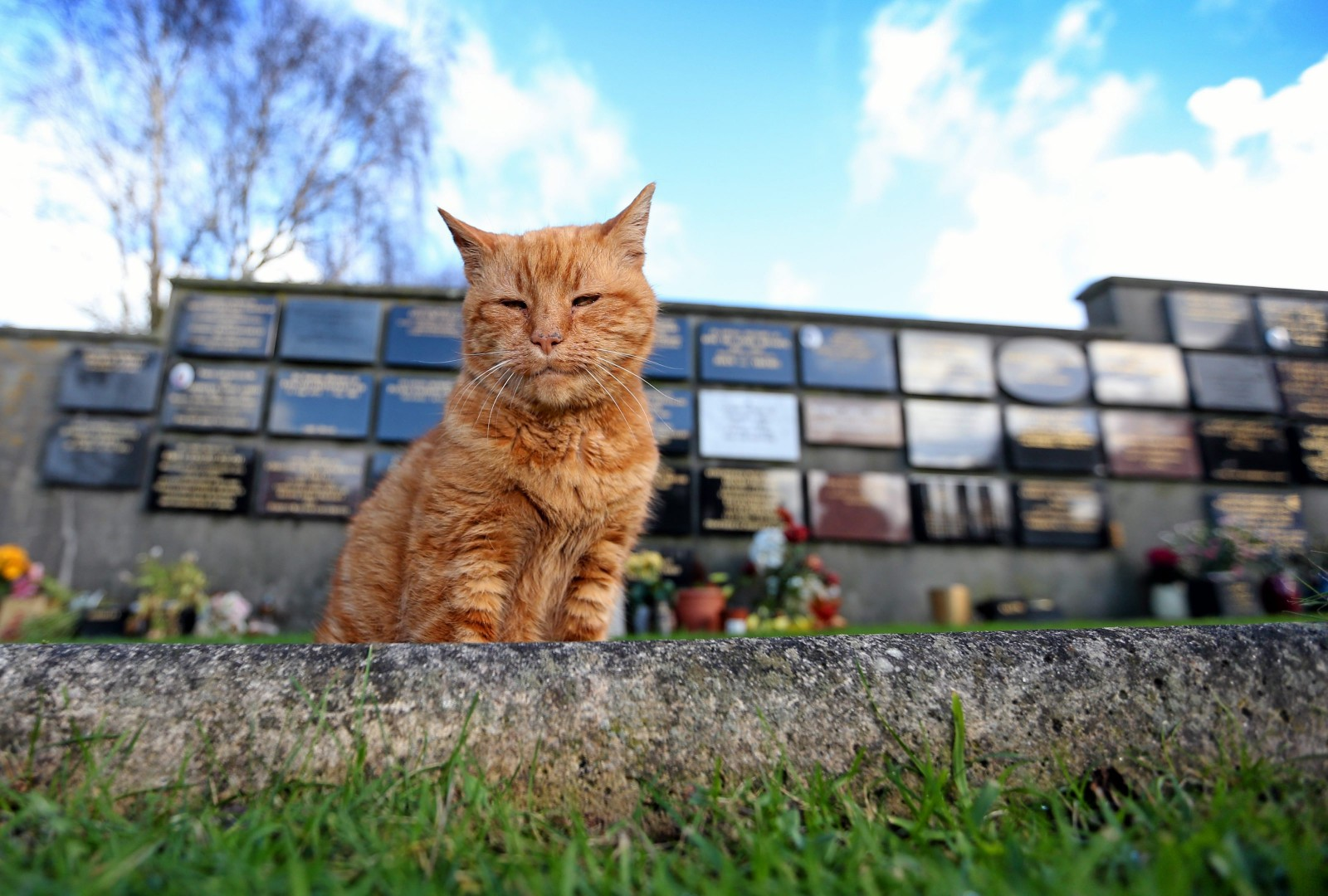 Tributes pour in for a much-loved cemetery cat who consoled mourners for over 20 years