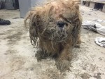 You won't believe this abandoned dog's remarkable transformation
