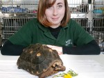 You won't believe where this escapee tortoise ended up and the carnage it caused
