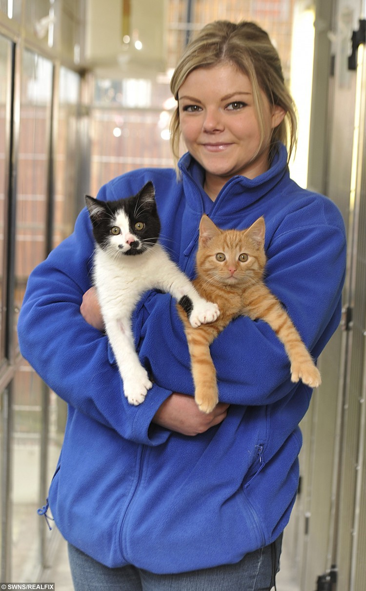 Sam Bell, a cat care assistant at Cat's Protection's St Helens Adoption Centre with Fingers and Thumbs