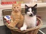 Could you give these cats sporting huge paws with extra toes the loving home they need?