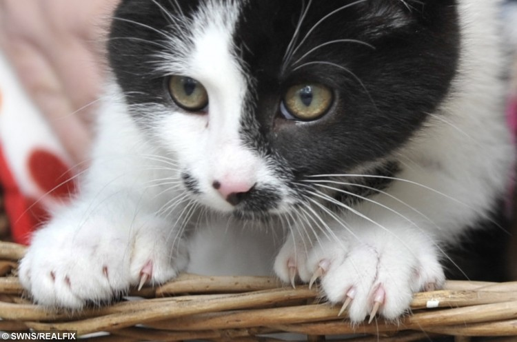 Fingers and Thumbs who are homed at Cat's Protection's St Helens Adoption Centre with Fingers and Thumbs