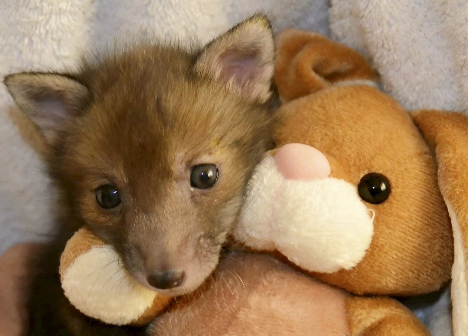 Aww! These adorable photos of a baby fox and his best friend will melt your heart.