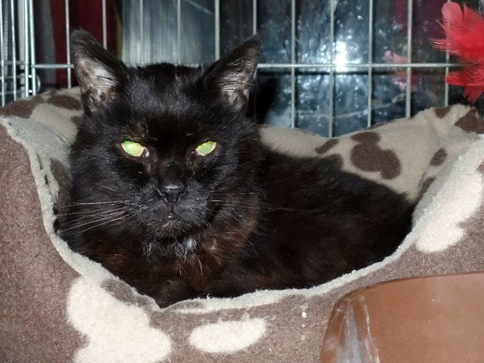 Missing cat 'euthanised by vet' because it did not have a microchip – just THREE HOURS after he was found