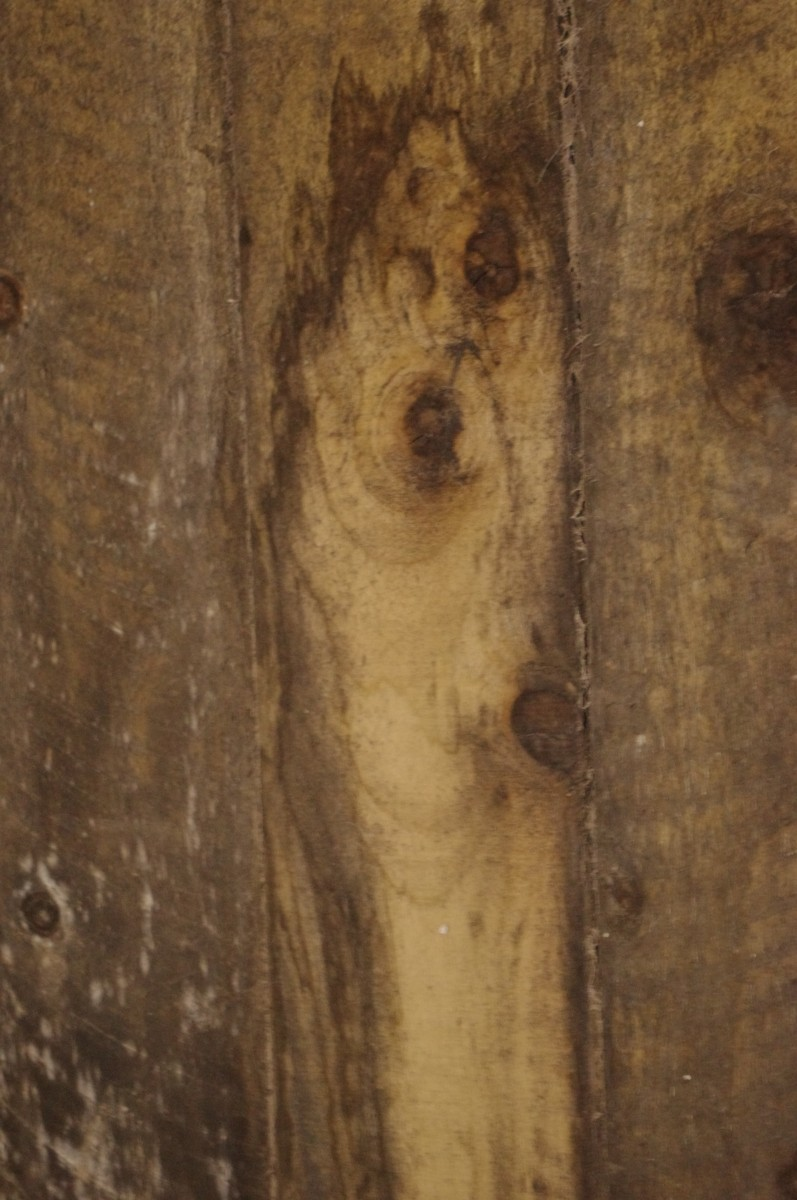 A stunned pet owner spotted the face of her dog in a water stain on a stable wall