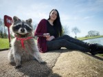 Meet Cody – the raccoon that thinks he's a dog and who saved this woman's life