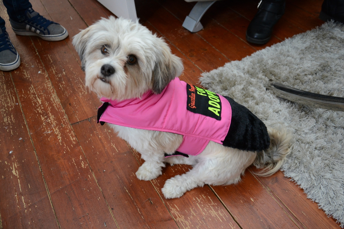 Mum helps rescued dogs find adoptive owners by sewing them special designer COATS