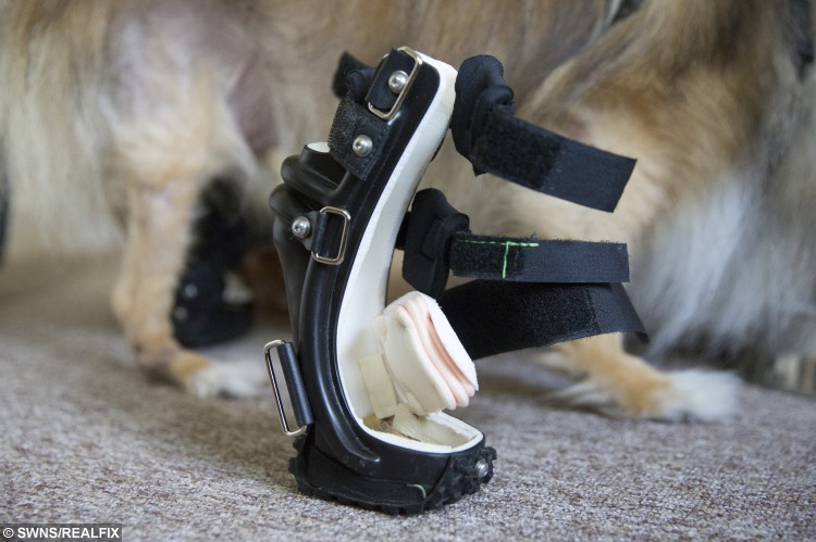 What Can Cause Dog To Have Floppy Feet