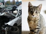 Kitten mysteriously disappears after horror motorway crash – only to be found alive and well two weeks later