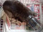 Cat has lucky escape after getting head stuck in jar