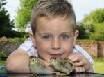 Little boy saves chicks from dying by hatching them in airing cupboard