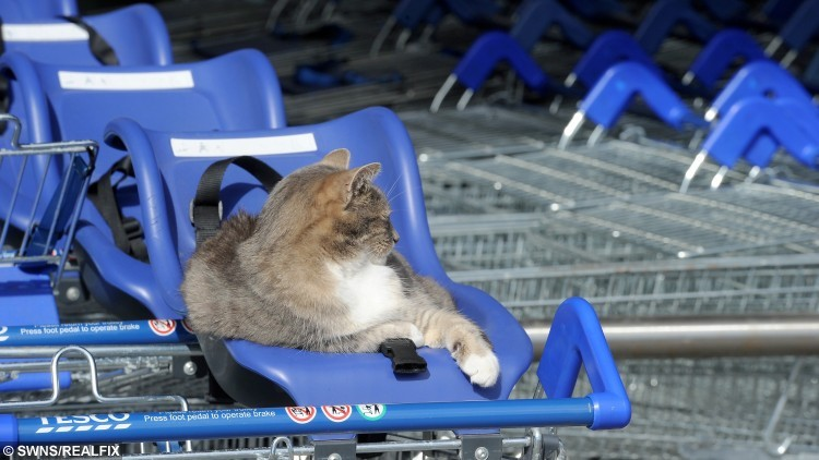 The sizeable following for the Orkney tabby has led to it being affectionately named the Tesco Kirkwall Cat.
