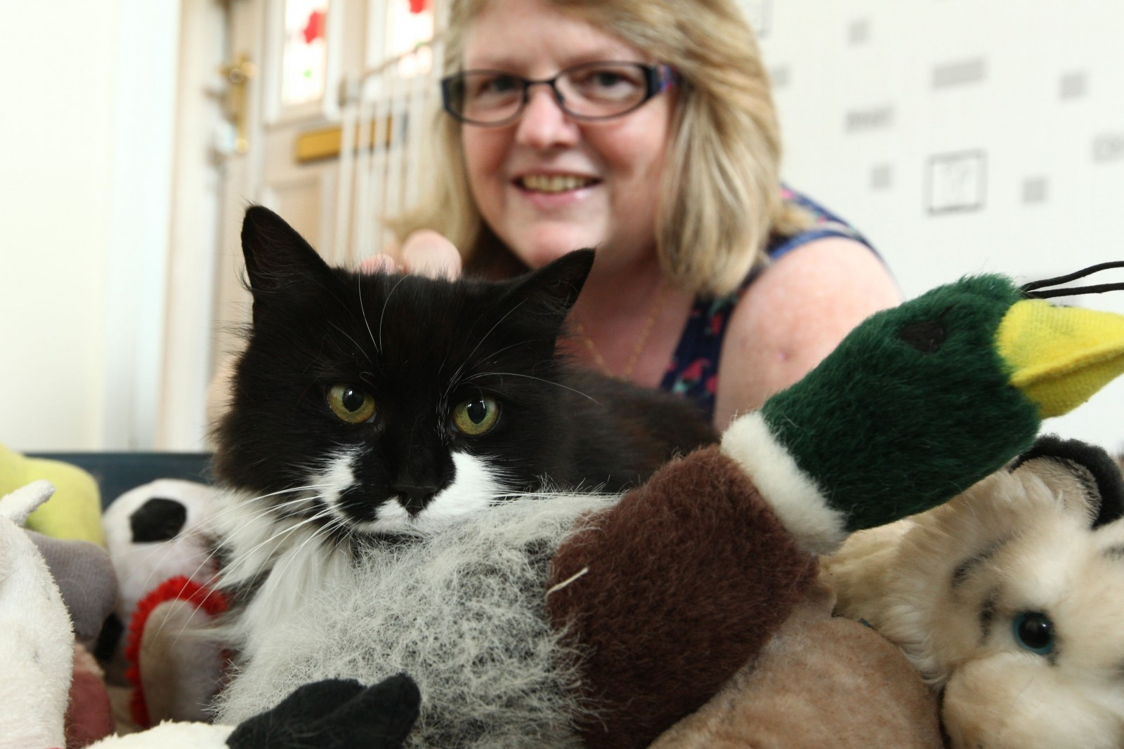 Meet mischievous moggy Milly – the real life cat burglar who can't stop stealing