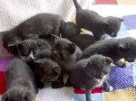 Box full of cute kittens found abandoned the day they were born