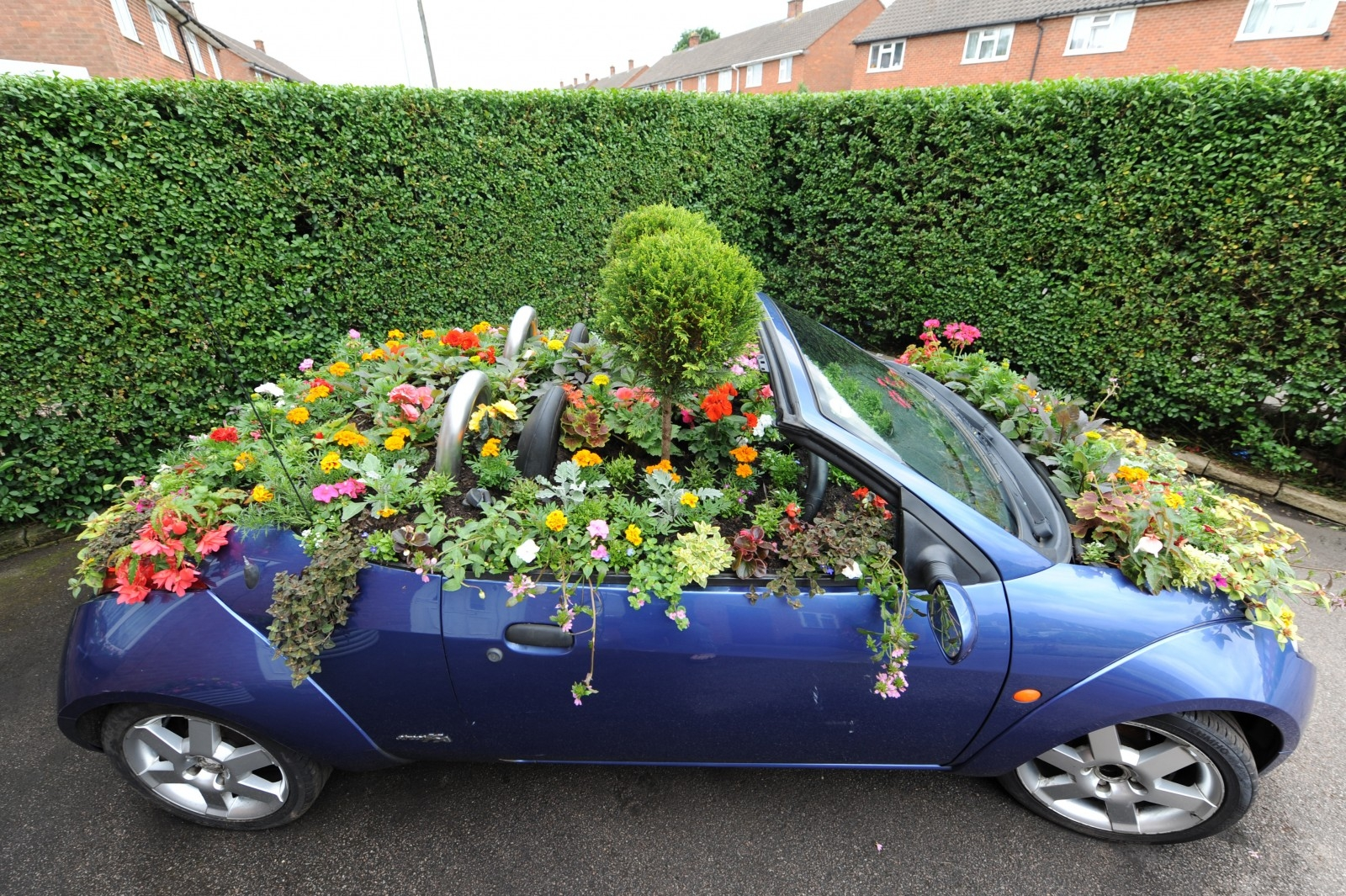 Flower Power – a family have put some diesel into winning this year's Britain in Bloom competition