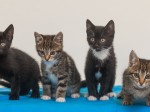 The number of abandoned and dumped cats in Britain has risen to its highest EVER level