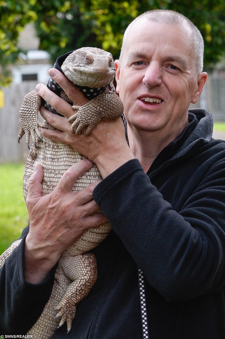 Retired electrical engineer John Robinson, 60 from Loughborough enjoys nothing more than taking his 4ft pet lizard for a walk around the local playing fields