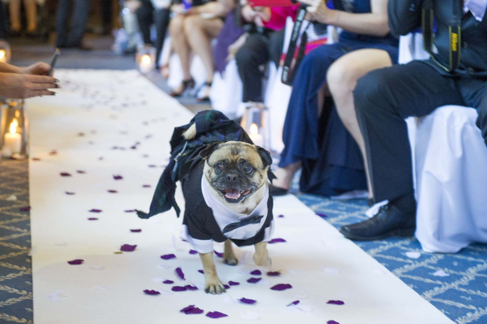 With this PUG… Adorable mutt is ring bearer for couple's wedding