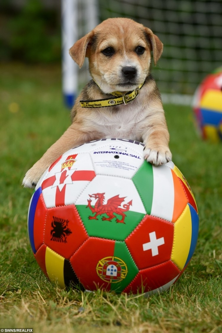 These crossbreed puppies need homes (and maybe a football lesson.)