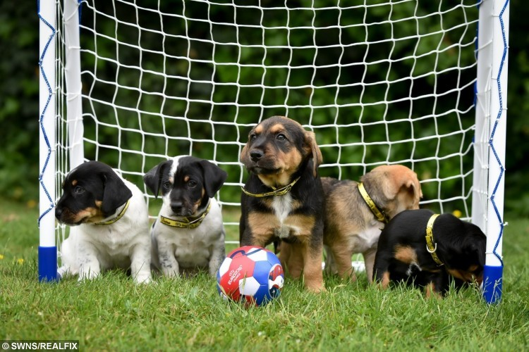 adorable puppies hold a kick-about.