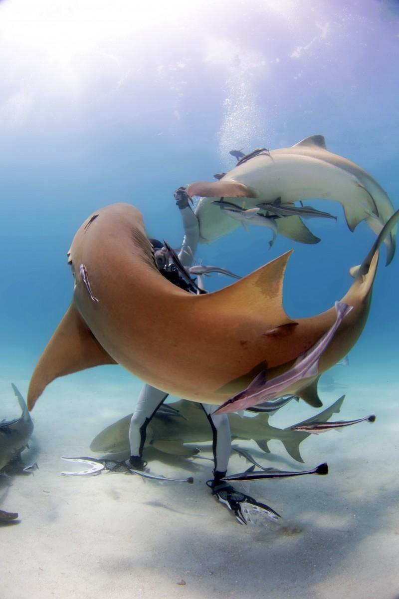 The sharks circle around him