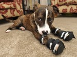 Adorable pup with wonky legs finally find loving new home