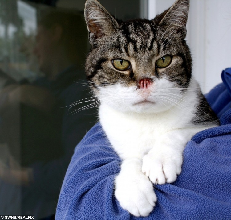 Dave the rescue cat - who has no nose