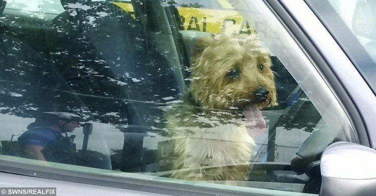 Police officers smashed a car window to save the life of a dog trapped inside a car