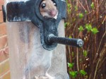 Hilarious pictures show mouse stuck in bird feeder after eating all the seeds