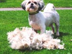 Stray dog given makeover after losing matted fur which stopped it wagging its tail
