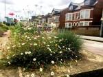 Mystery gardener brings colour to bleak dual carriageway by planting flowers