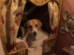 Dog has Britain's poshest kennel after owner creates palace under the stairs
