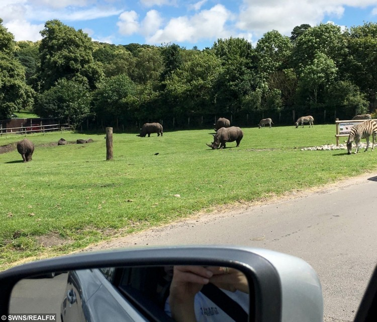 Taken of the Rhino's during their visit prior to the attack
