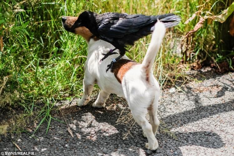 Vikki's dog  with Fagin