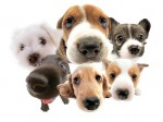 How to pick a dog breed according to your personality