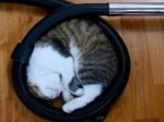 20 pictures that prove cats can fall asleep everywhere