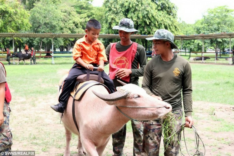 Autistic children are being given successful therapy - by riding on BUFFALO