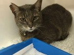Missing cat who caught commuter train is reunited with owner