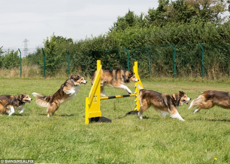 These fun pictures show homeless hounds being put through their paces in the very first OLYMPUP games.